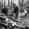 1959 - Campus Day lumbering