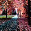 Fall at NMC